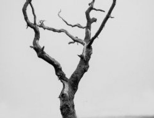 The Dead Tree:  Dig Up What Doesn't Grow