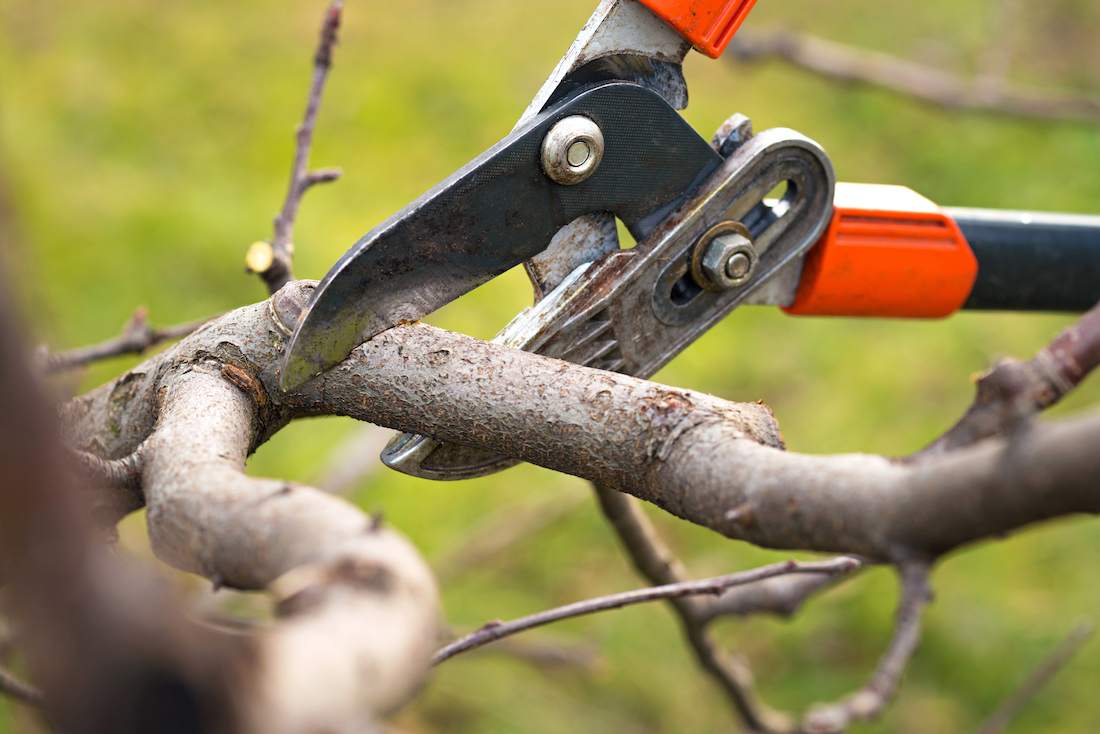 The Paradox of a Growing Life: Pruning Shearers