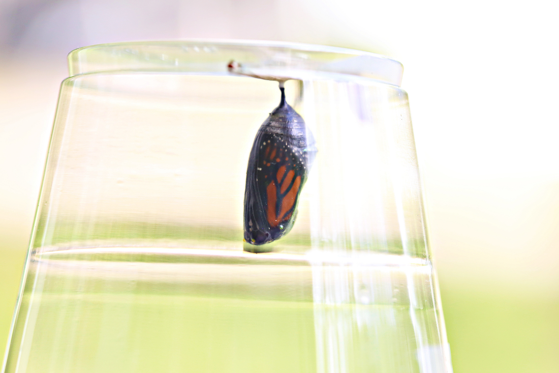 Watching for Miracles: The Butterfly Experience